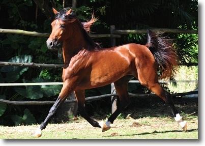 die teuersten pferde