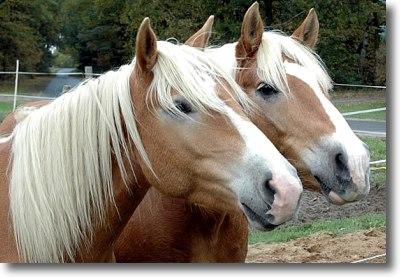 Zeig Mir Bilder Von Pferden : wege zum pferd blog archiv freundschaften unter pferden ~ Udekor.club Haus und Dekorationen