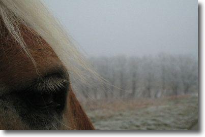 winterspaziergang1.jpg