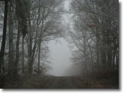 winterspaziergang5.jpg