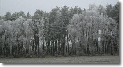 winterspaziergang8.jpg