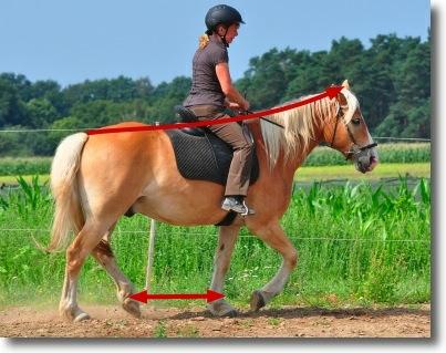 Der Pferdeerreger, wie zu bestellen