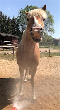 Pferd duschen