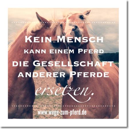 inspiration_wege-zum-pferd_2