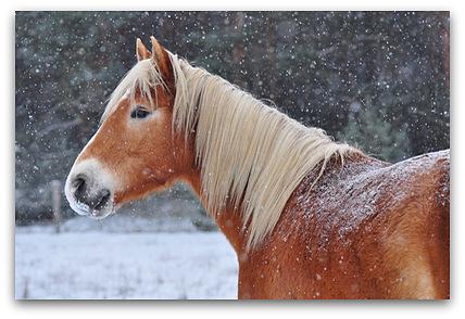 pferdewuensche