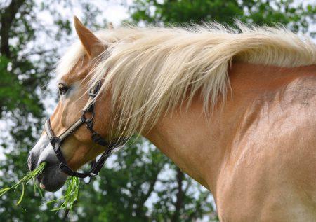 Mein Pferd ist ein Problem