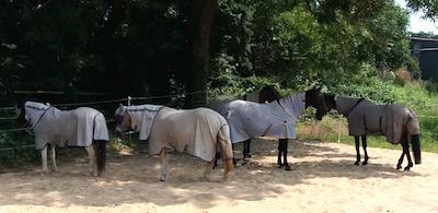 Pferde Hitze