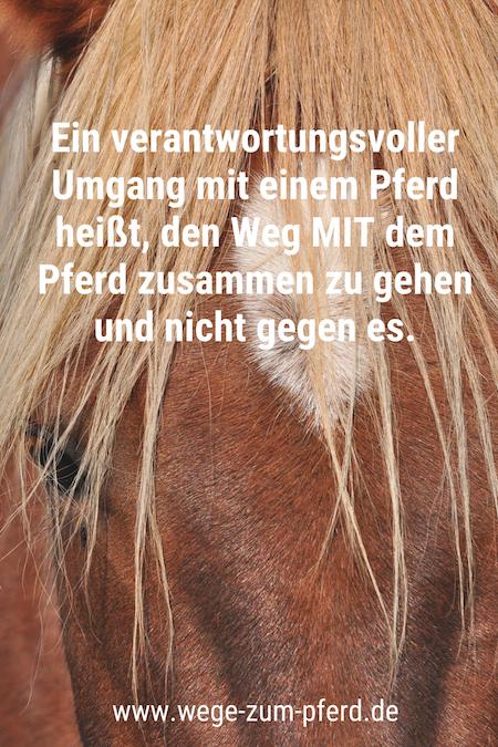 Verantwortung Pferd