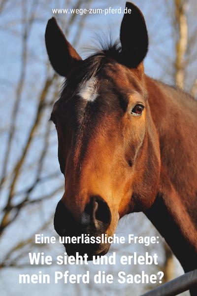 Aus Sicht des Pferdes