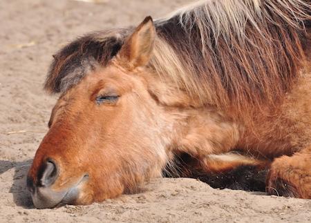 Newsletter Wege zum Pferd