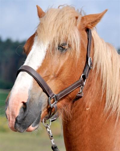 Genussgesicht beim Pferd