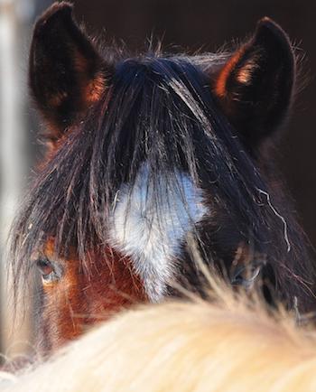 Silvester mit Pferden