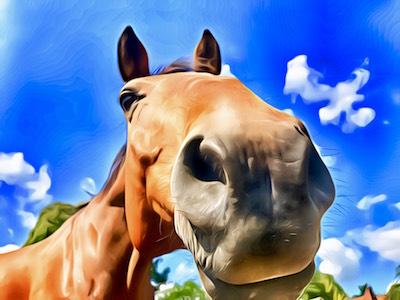 Ich bin's, Ihr Pferd – Wege zum Pferd