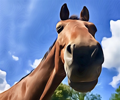 Monty Wege zum Pferd