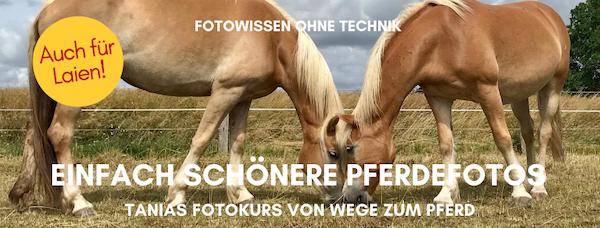 Fotokurs von Wege zum Pferd