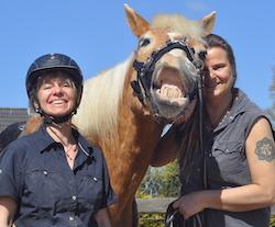 Shop von Wege zum Pferd
