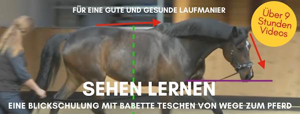 Blickschulung von Wege zum Pferd