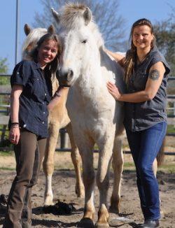 Der Reitkurs von Wege zum Pferd