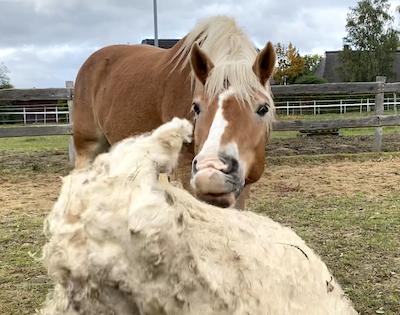 Vertrauenstraining – Wege zum Pferd