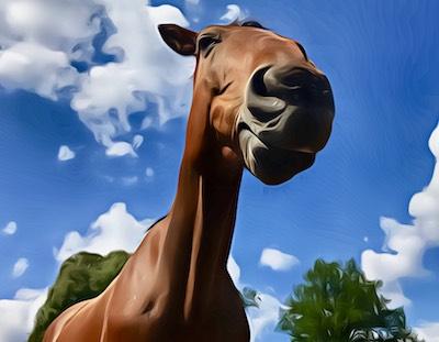 Monty – Wege zum Pferd