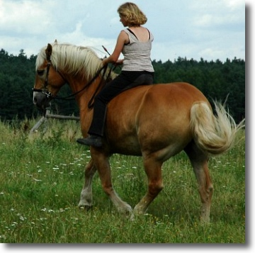 Wege zum Pferd » Blog Archiv » Grundwissen über Anatomie und ...