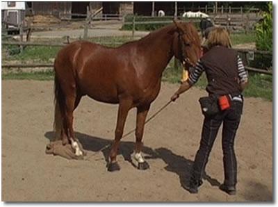 spielen mit dem pferd